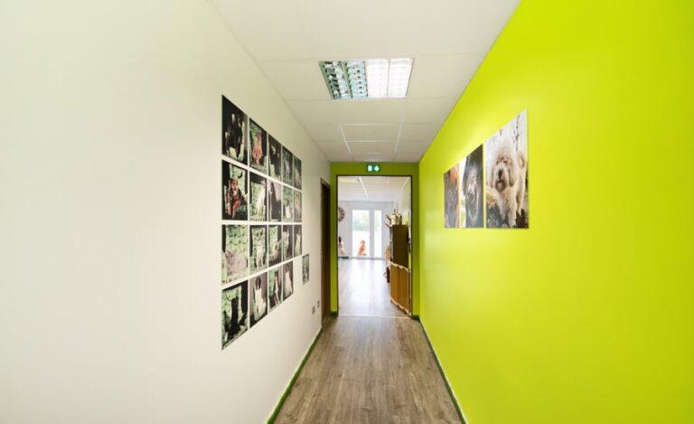 Aménagement bureaux Dog Hotel couloir