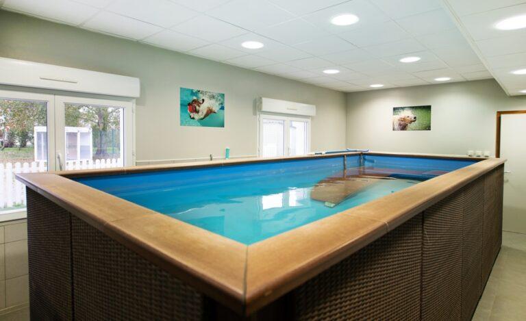 Aménagement bureaux Dog Hotel piscine