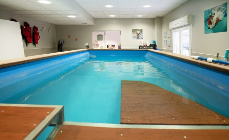 Aménagement bureaux Dog Hotel piscine close